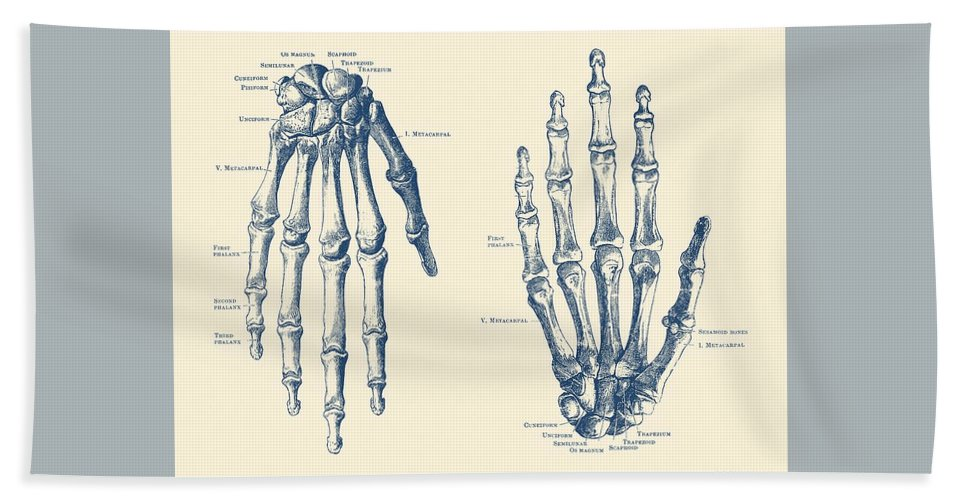 Double Hand Skeletal Diagram Vintage Anatomy Print Hand Towel For