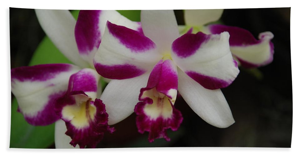 Macro Bath Towel featuring the photograph Double Orchid by Rob Hans