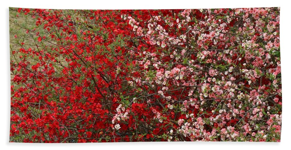 Quince Hand Towel featuring the photograph Double Quince by Kathryn Meyer