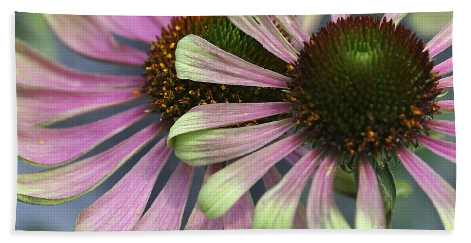 Flower Hand Towel featuring the photograph Double Vision Cone by Deborah Benoit