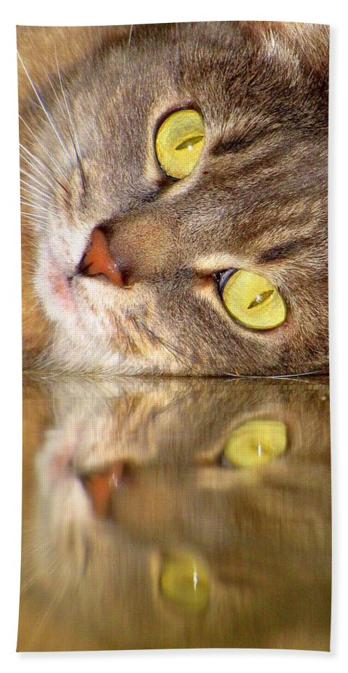 Cats Hand Towel featuring the photograph Double Vision by Lori Pessin Lafargue