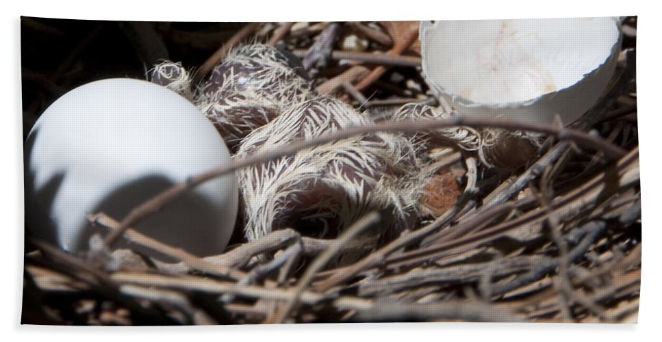 Nest Bath Sheet featuring the photograph Dove Hatchling by Steven Natanson