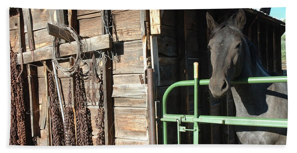Horse Hand Towel featuring the photograph Down On The Ranch by Jerry McElroy