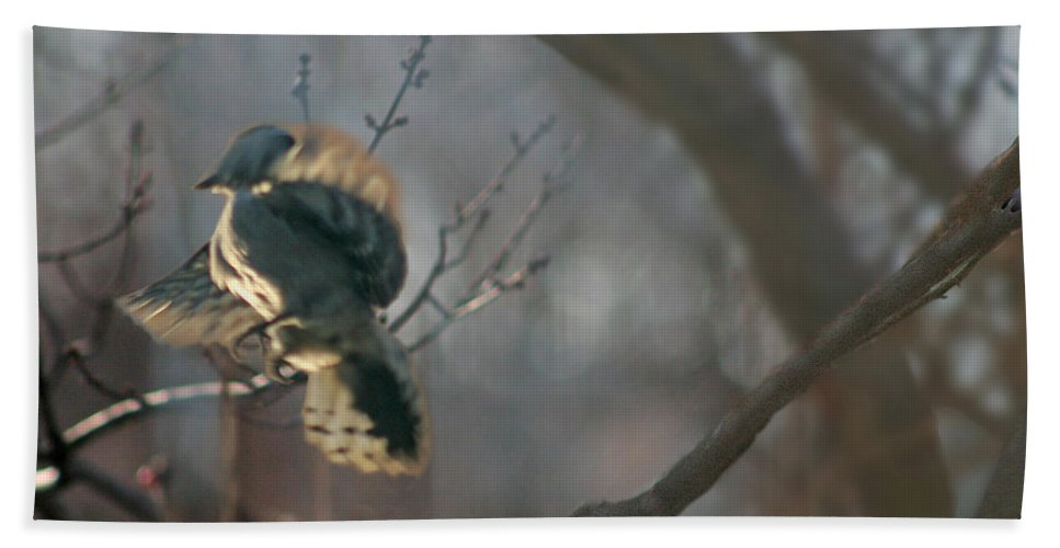 Nature Bath Sheet featuring the photograph Downey Woodpecker by Steve Karol