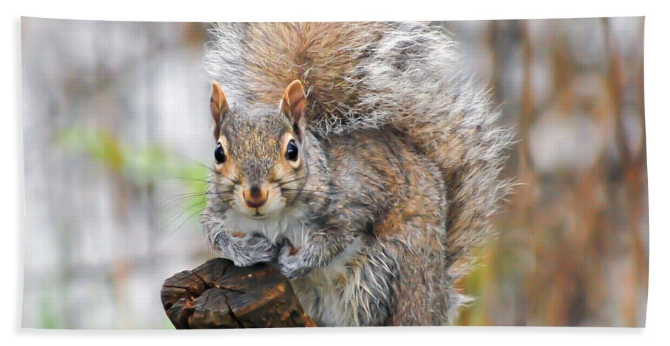 Squirrel Hand Towel featuring the photograph Downright Adorable by Kerri Farley