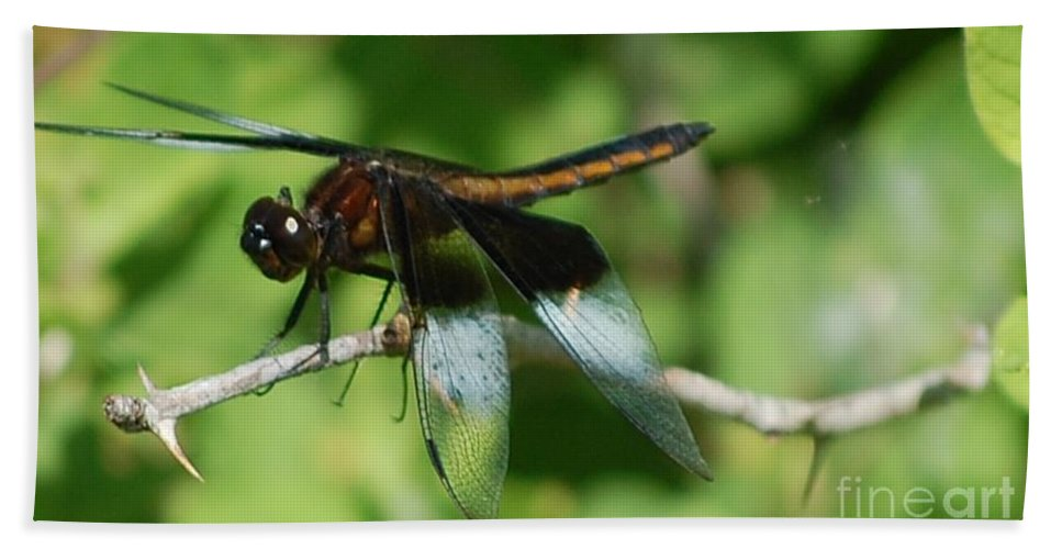Digitall Photo Bath Towel featuring the photograph Dragon Fly by David Lane