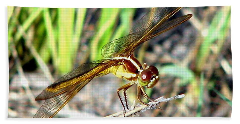 Dragonfly Hand Towel featuring the photograph Dragonfly 1 by J M Farris Photography