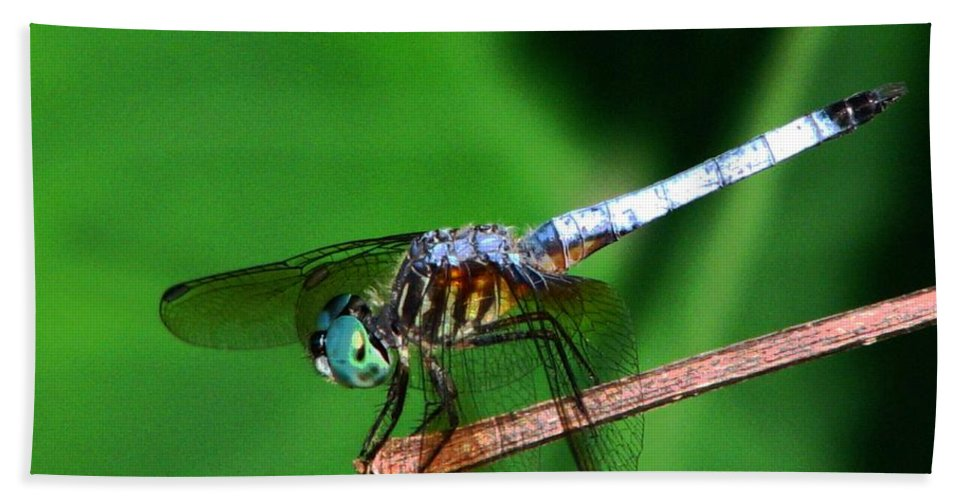 Dragonfly Hand Towel featuring the photograph Dragonfly 11 by J M Farris Photography