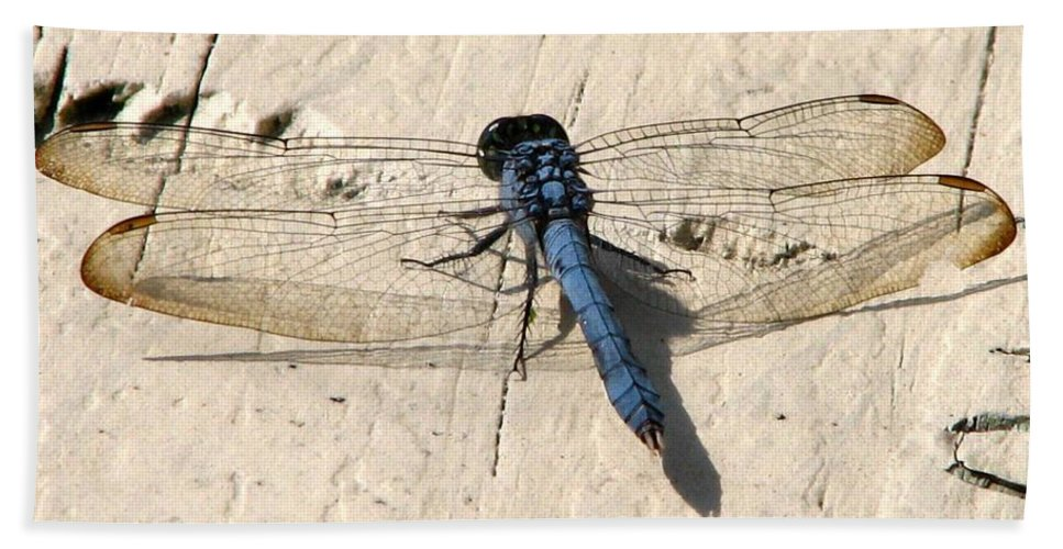 Dragonfly Hand Towel featuring the photograph Dragonfly 5 by J M Farris Photography