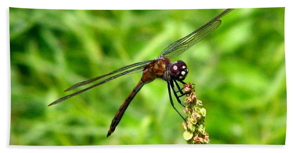 Dragonfly Bath Sheet featuring the photograph Dragonfly 7 by J M Farris Photography