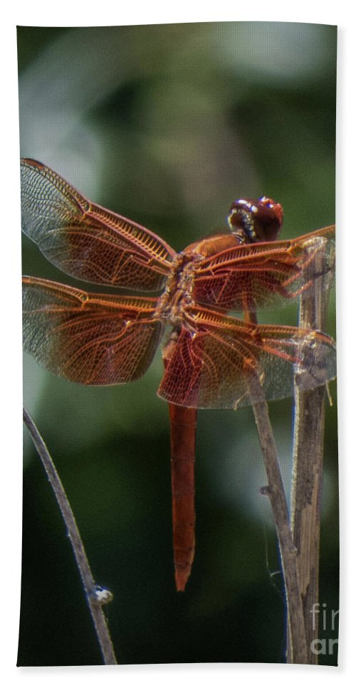 Dragonfly Hand Towel featuring the photograph Dragonfly 9 by Christy Garavetto