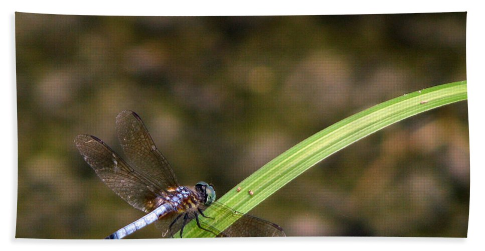 Dragonfly Hand Towel featuring the photograph Dragonfly by Amanda Barcon