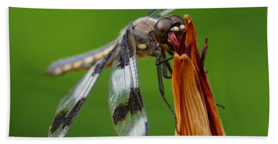 Spokane Hand Towel featuring the photograph Dragonfly by Ben Upham III
