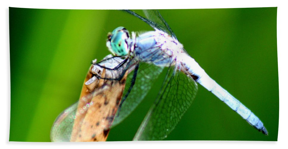 Dragonfly Bath Sheet featuring the photograph Dragonfly Blue by Chris Brannen