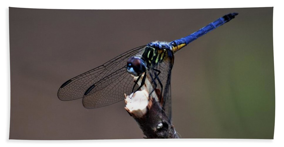 Dragonfly Color Hand Towel featuring the photograph Dragonfly Color by Warren Thompson
