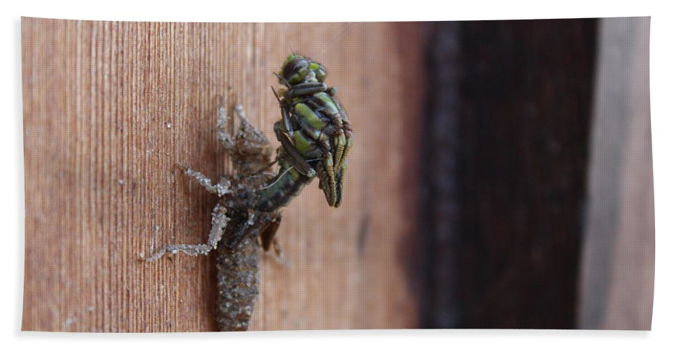 North Bath Sheet featuring the photograph Dragonfly Ecdysis by Nicholas Miller