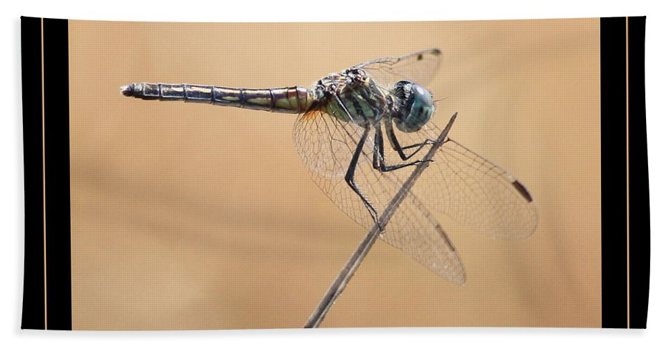 Dragonfly Hand Towel featuring the photograph Dragonfly Needlepoint With Border by Carol Groenen