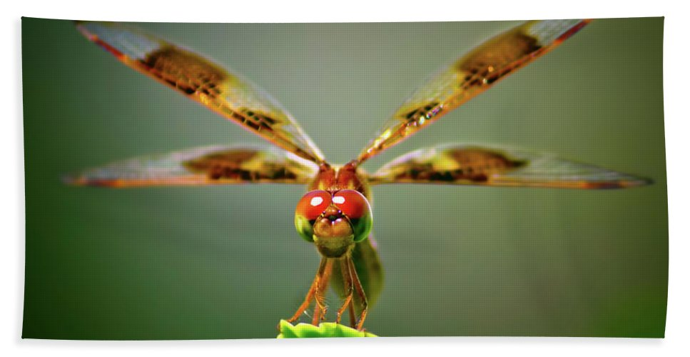 Dragonfly Hand Towel featuring the photograph Dragonfly Pitstop by Mark Andrew Thomas