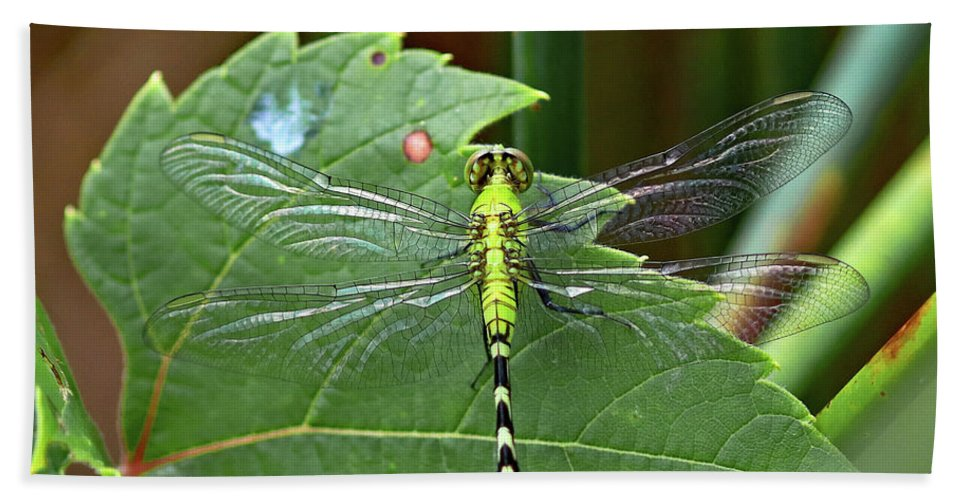 Dragonfly Hand Towel featuring the photograph Dragonfly by Steve Bell