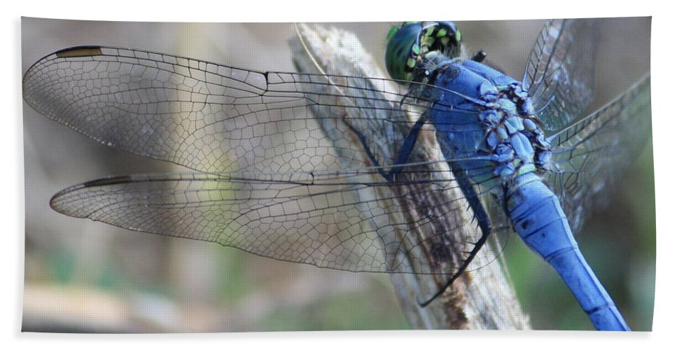 Dragonfly Bath Towel featuring the photograph Dragonfly Wing Detail by Carol Groenen