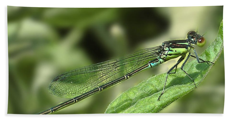 Dragon Hand Towel featuring the photograph Dragonfly1 by Svetlana Sewell
