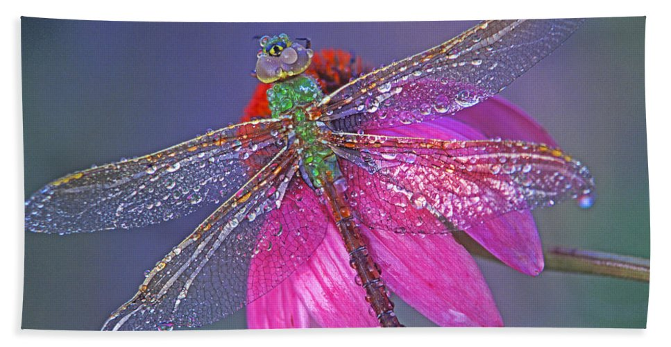 Dew Covered Dragonfly Rests On Purple Cone Flower Bath Sheet featuring the photograph Dreaming Dragon by Bill Morgenstern