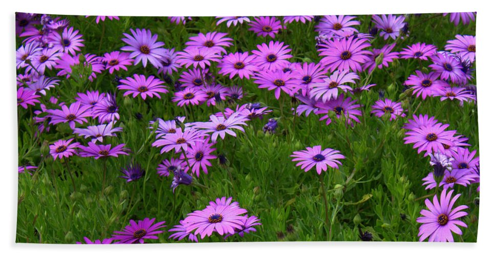 Floral Hand Towel featuring the photograph Dreaming Of Purple Daisies by Carol Groenen