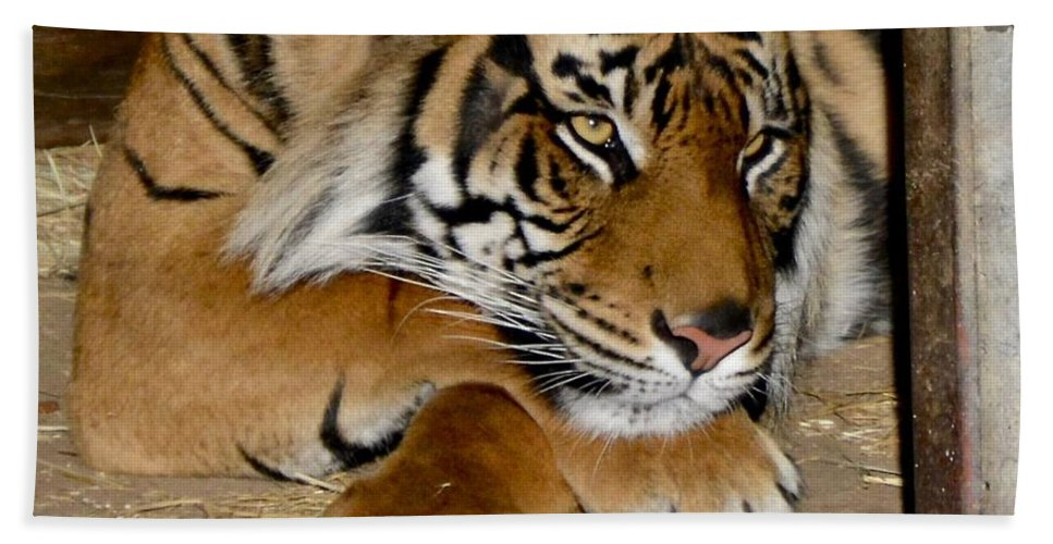 Tiger Hand Towel featuring the photograph Dreamy by Jacqueline Howe