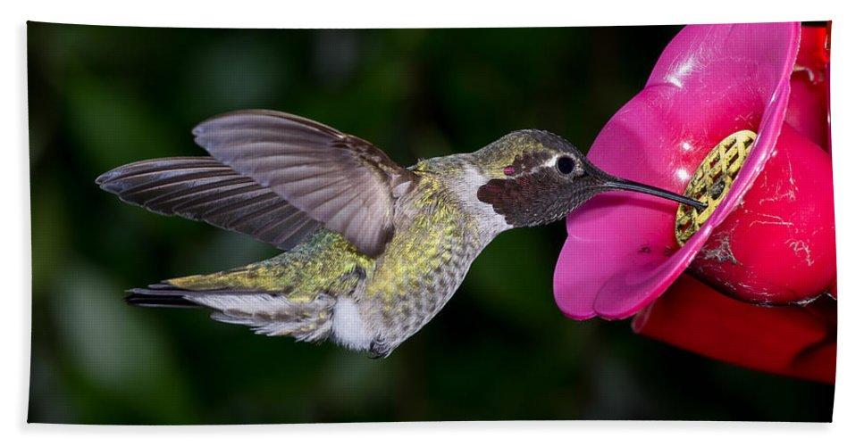Hummingbird Bath Sheet featuring the photograph Drink Deep by Greg Nyquist