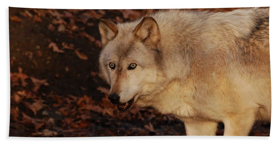 Wolf Hand Towel featuring the photograph Drink Up by Lori Tambakis