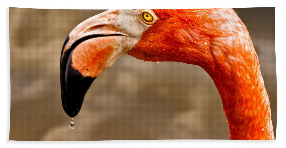 Flamingo Bath Towel featuring the photograph Dripping Flamingo by Christopher Holmes