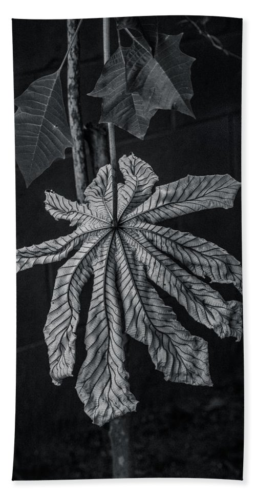 Dry Hand Towel featuring the photograph Dry Leaf Collection Bnw 2 by Totto Ponce