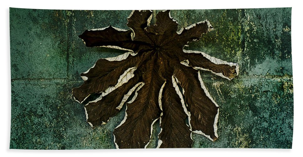 Dry Hand Towel featuring the photograph Dry Leaf Collection Wall 1 by Totto Ponce