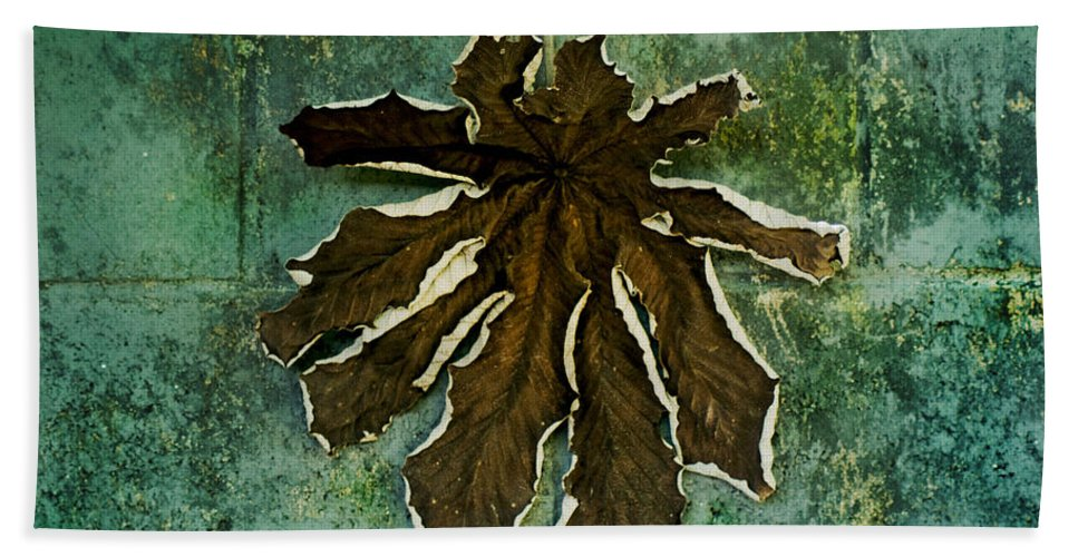 Dry Hand Towel featuring the photograph Dry Leaf Collection Wall by Totto Ponce