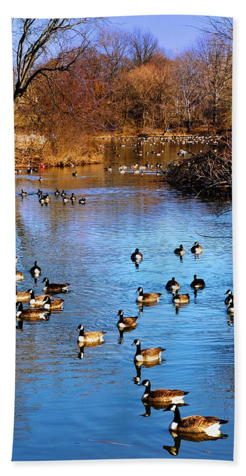 Birds Bath Sheet featuring the photograph Duck Duck Goose Goose by Bill Cannon