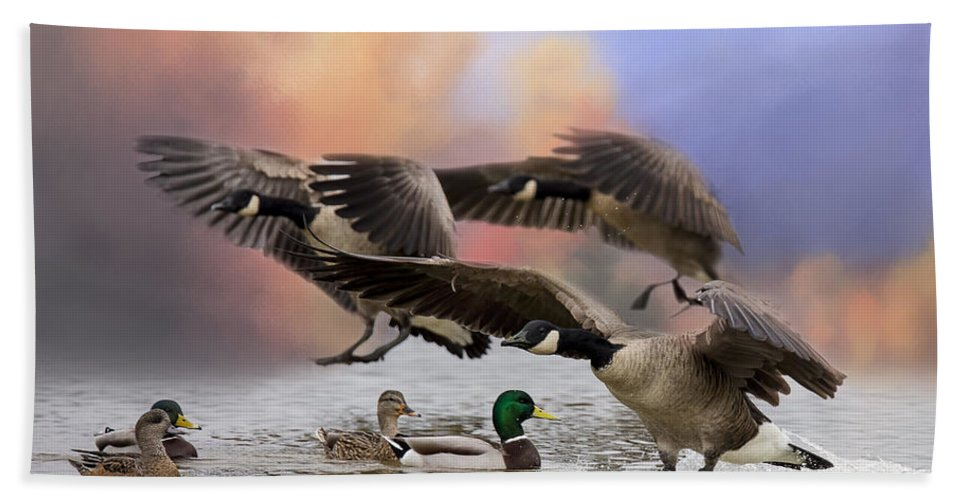 Canada Geese Hand Towel featuring the photograph Duck Ducks 2 by Randy Hall