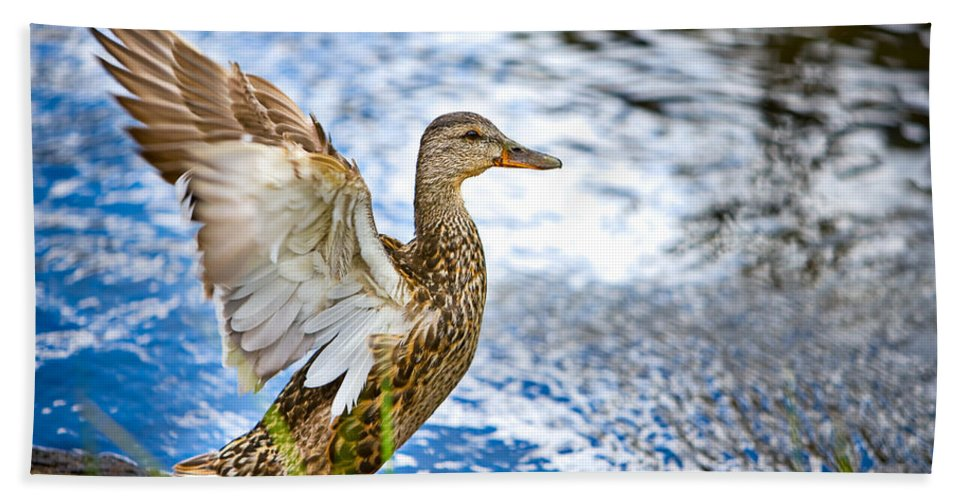 Lake Hand Towel featuring the photograph Duck by James O Thompson