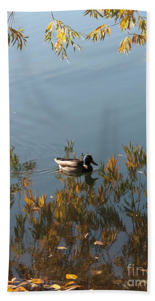 Autumn Hand Towel featuring the photograph Duck On Golden Pond by Carol Groenen