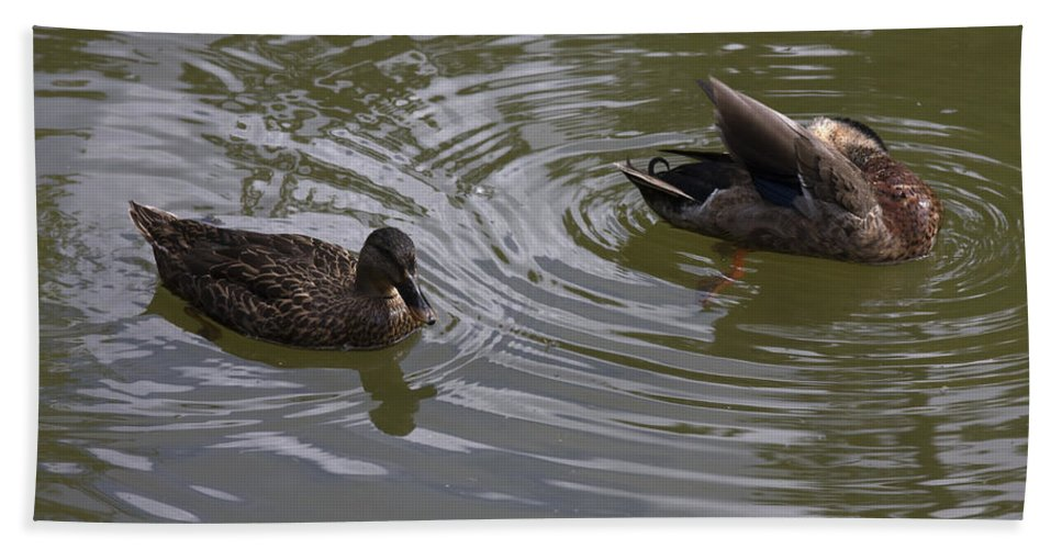 Duck Pair Swimming Bath Sheet featuring the photograph Duck Pair by Sally Weigand