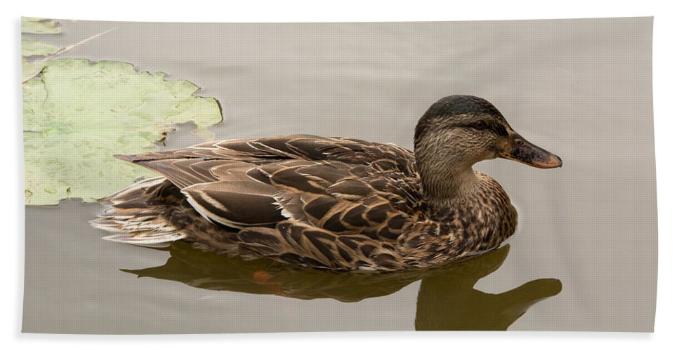 Duck Hand Towel featuring the photograph Duck Reflecting by Linda Kerkau
