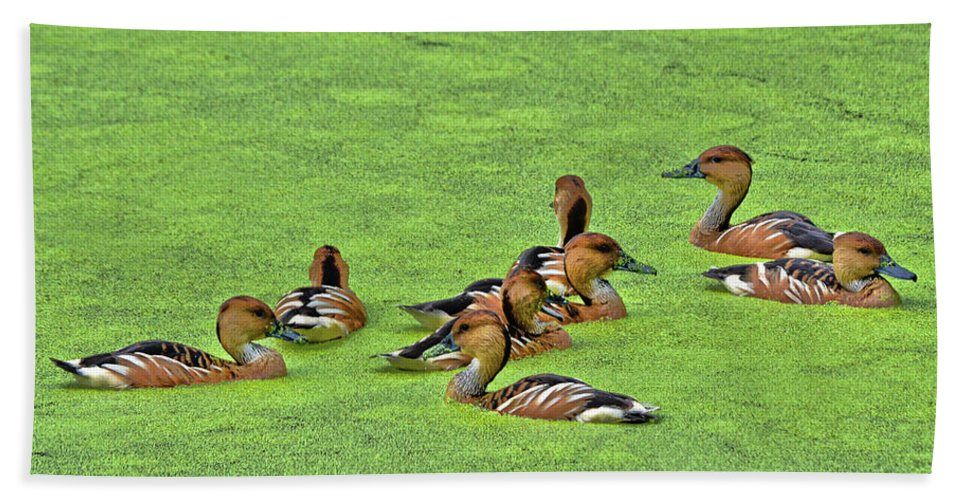 Duck Bath Towel featuring the photograph Duck Weed Club by Spade Photo