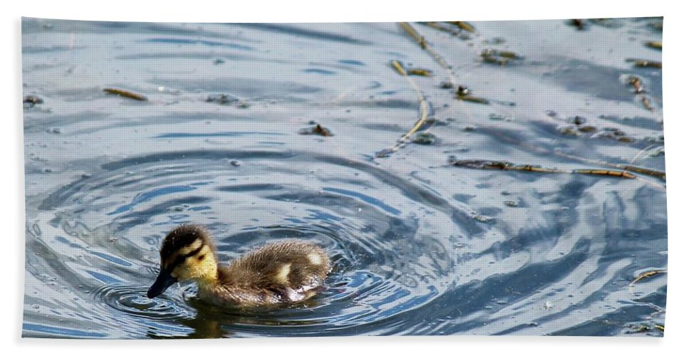 Duckling In The Lake. Bath Sheet featuring the photograph Duckling by Kathryn Wilde