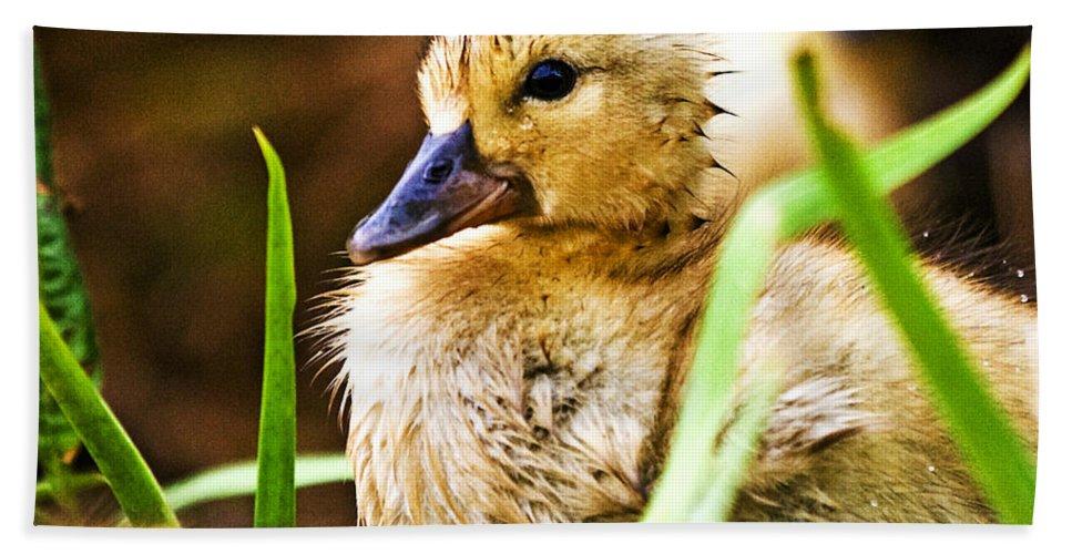 Duck Hand Towel featuring the photograph Duckling by Scott Pellegrin