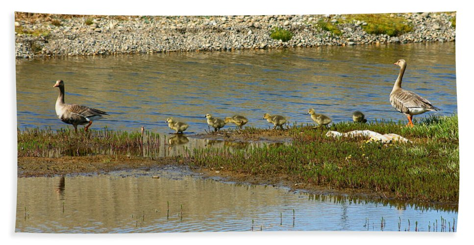 Ducks Bath Towel featuring the photograph Ducks In A Row by Anthony Jones