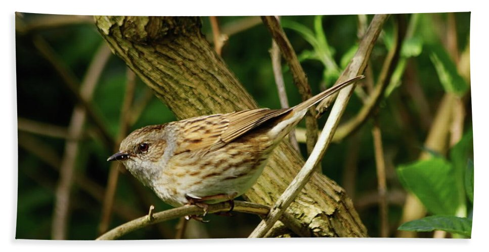Dunnock Hand Towel featuring the photograph Dunnock In A Hedgerow by Jeff Townsend