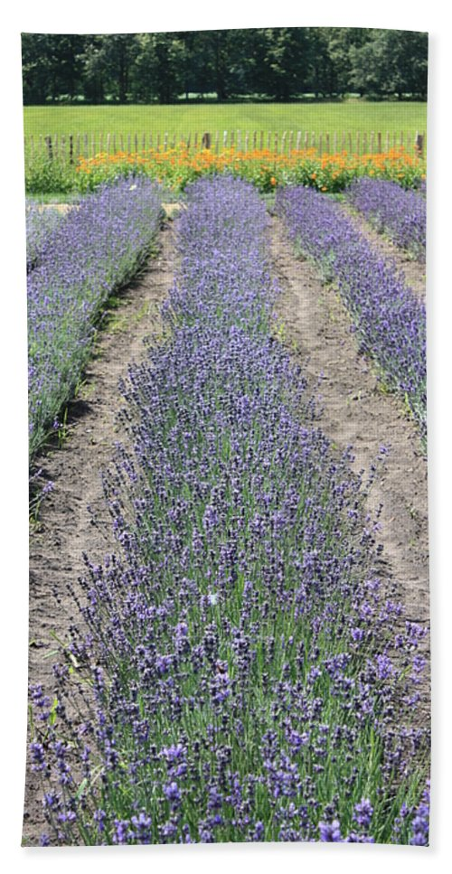Lavender Bath Sheet featuring the photograph Dutch Lavender Field by Carol Groenen