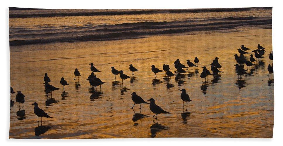 Beach Ocean Seagull Gull Bird Birds Sand Wave Waves Sun Sunrise Reflection Shaddow Sky Cloud Bath Towel featuring the photograph Eager Anticipation by Andrei Shliakhau