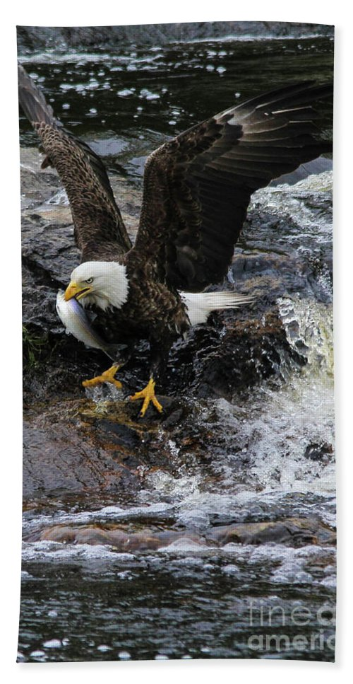 Bald Eagle Hand Towel featuring the photograph Eagle Catches Fish by Katie W