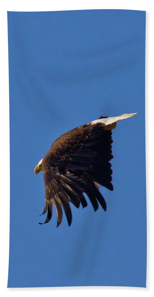 Diving Eagle Hand Towel featuring the photograph Eagle Dive by Linda Unger