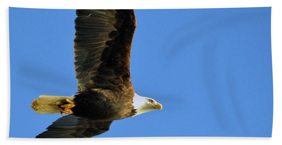 Eagle Bath Sheet featuring the photograph Eagle In Flight by Brian O'Kelly